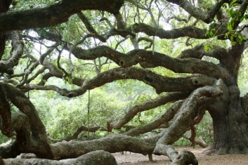 292149025-angel-oak-14_54_990x660_201404181815